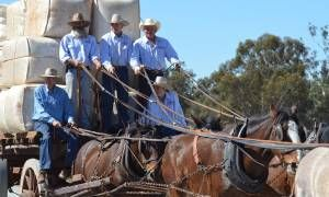 Barellan Working Clydesdales Assn inc.the good old days weekend