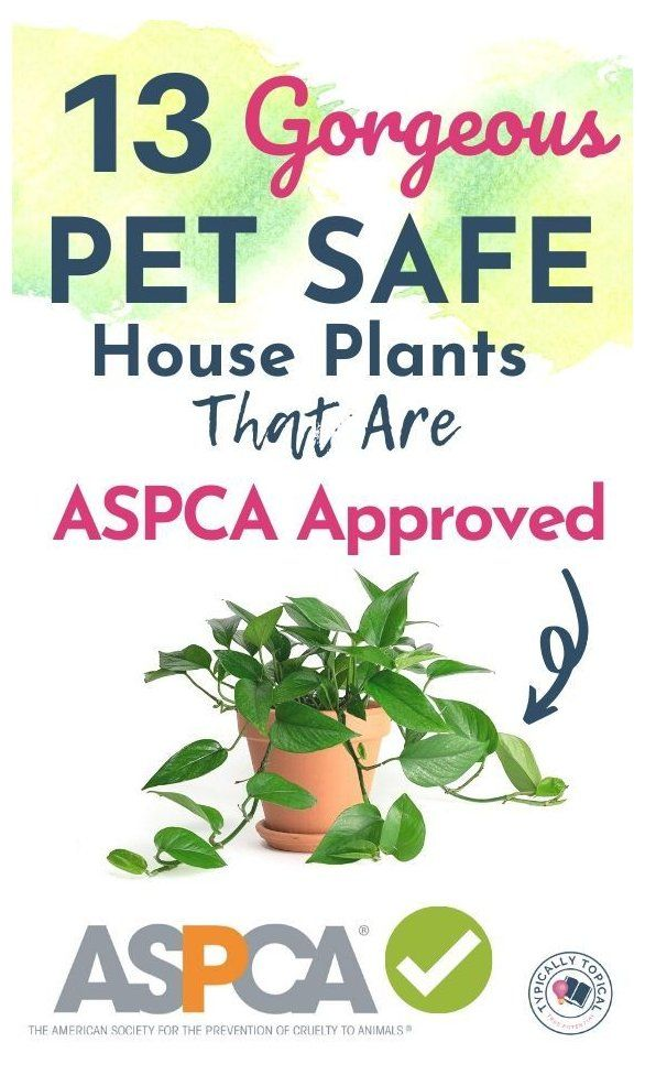 13 Pet Friendly Indoor House Plants That Look Amazing And Are Low Maintenance Big Indoor Cat Safe House Plants Safe House Plants Indoor Plants Pet Friendly