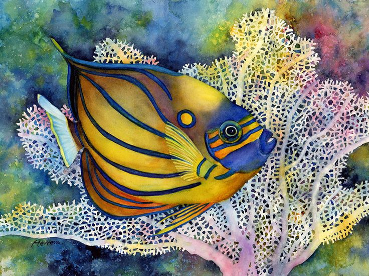 Fish Painting - Blue Ring Angelfish by Hailey E Herrera