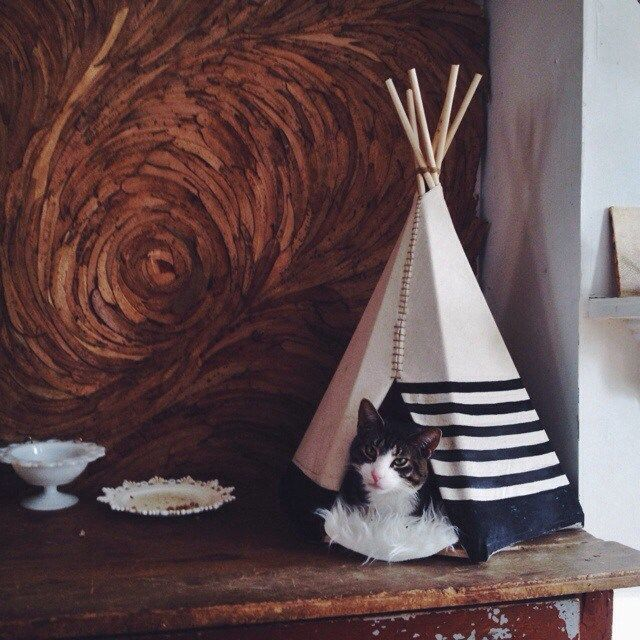 ariele alasko teepee for cat and a leaf wall behind home pinterest the o 39 jays leaves. Black Bedroom Furniture Sets. Home Design Ideas