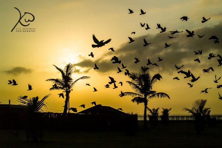 Girds in The morning Light #kylewoodenbergphotography #golden #Durban #southafrica #sunrisephotography