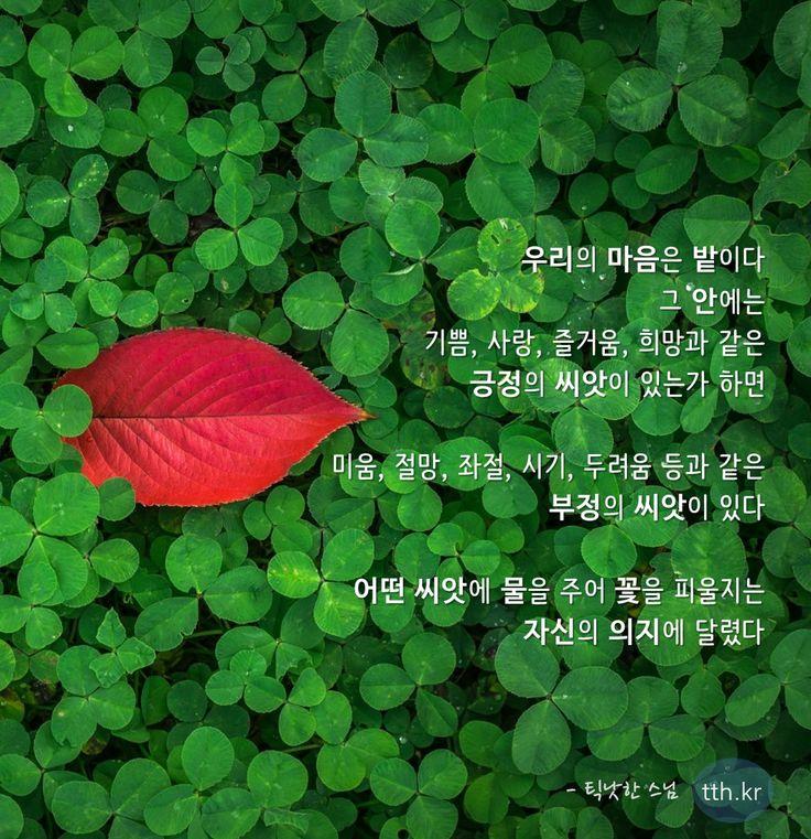 우리의 마음은 밭이다. 그 안에는 기쁨, 사랑, 즐거움, 희망과 같은 긍정의 씨앗이 있는가 하면  미움, 절망, 좌절, 시기, 두려움 등과 같은 부정의 씨앗이 있다.  어떤 씨앗에 물을 주어 꽃을 피울지는 자신의 의지에 달렸다.  - 틱낫한 스님 #톡톡힐링