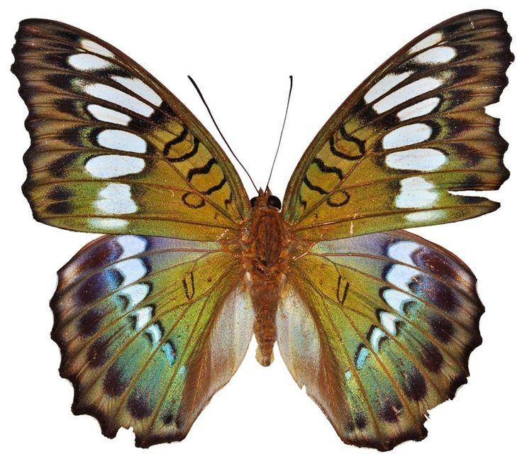 19 imagens que provam a simetria perfeita da natureza - Mega Curioso