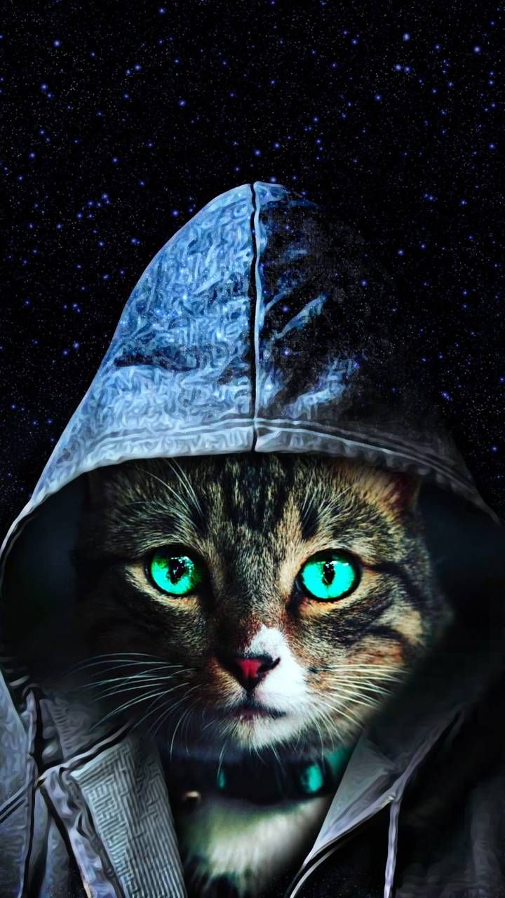 Download Cat Wallpaper By Martgee 47 Free On Zedge Now Browse Millions Of Popular Cat Wallpapers And Rington Cat Wallpaper Creepy Cat Cat Phone Wallpaper