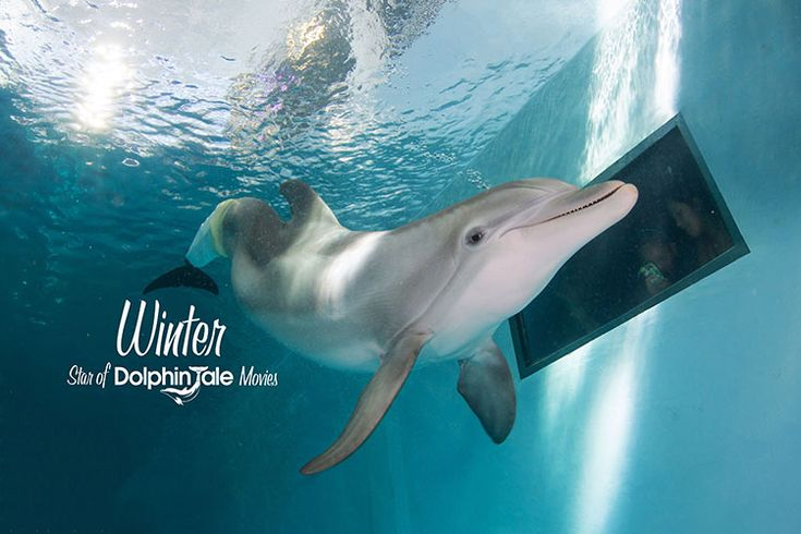 Save when you visit Winter & Hope at the Clearwater Aquarium, discount tickets available at the Welcome Center. Click here!