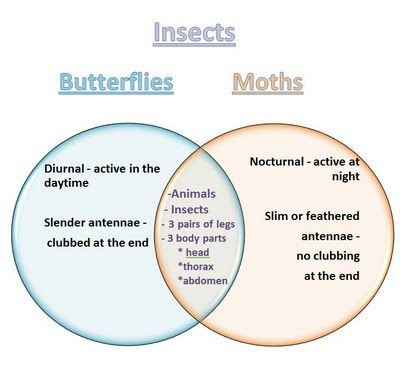 Venn Diagram Butterflies and Moths Insects Pinterest