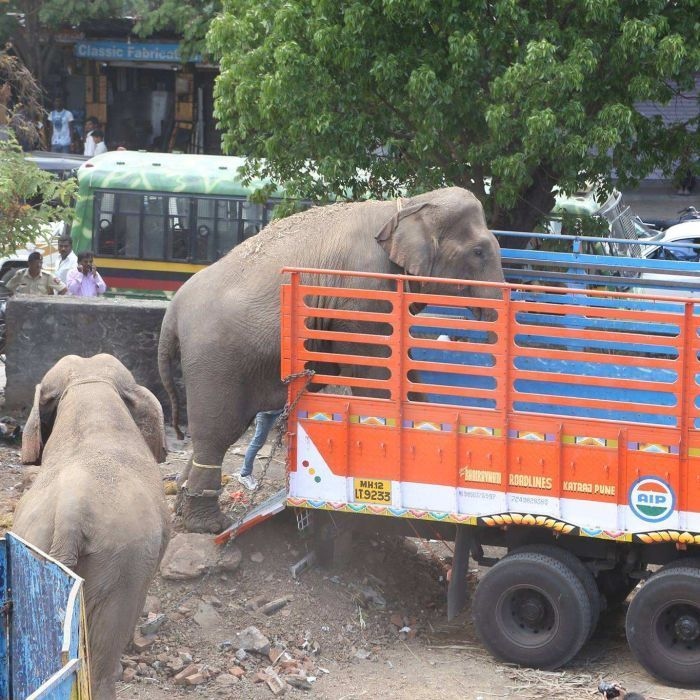 Animal groups rescue 22 Rambo Circus animals in India including elephants after cruelty claims - ABC News (Australian Broadcasting Corporation)