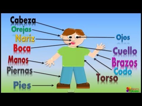 Las Partes Del Cuerpo Para Niños, Our Body Parts In Spanish For Children (Video Infantil) - YouTube