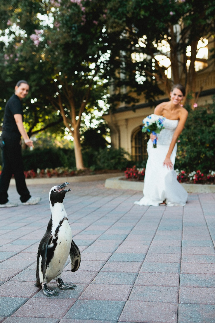 a penguin might show up when you get married at the zoo