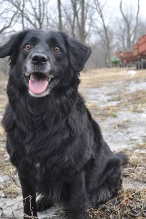 Pin by Sharon Boulanger on Lost Dogs MN | Pinterest