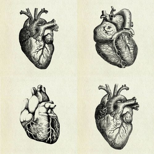 Human heart prints. A fabulous & fun exercise is drawing anatomical hearts! Plan to set asside some undisturbed time & give it your best effort! I promise you will be happy with outcome of your drawing! Stu