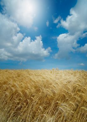 Summertime #print #photography #bestseller #nature #harvest #wheat #field #summer @displate
