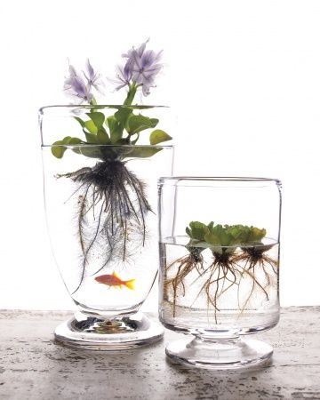 DIY WATER GARDEN :: Plant, water, enjoy. Creating a container water garden is one of many cool ways to beat the summer heat. These plants need sun, but they don't require soil because they get their nutrients from water. Martha's Aquatic Plant Sources are also supplied. | #fishbowl #watergarden