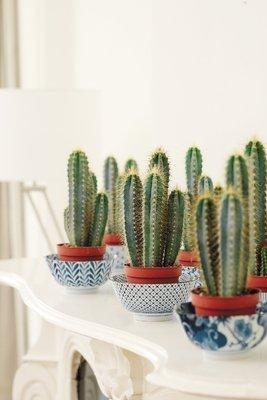 Plantenpotten? Je kunt ook op zoek gaan naar dessertschaaltjes en daar de planten in zetten.