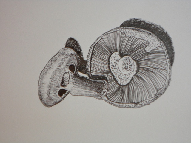 Mushrooms done in pencil