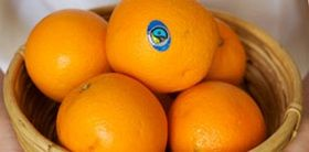 Fairtrade oranges