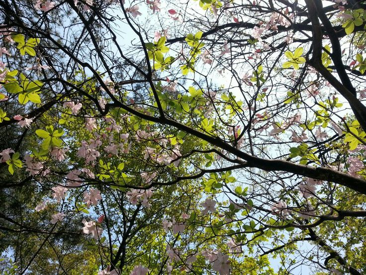 (3/3) 2013 Spring in the Bukhansan, a mountain of Seoul in South Korea