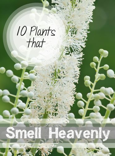 10 Plants that Smell Heavenly