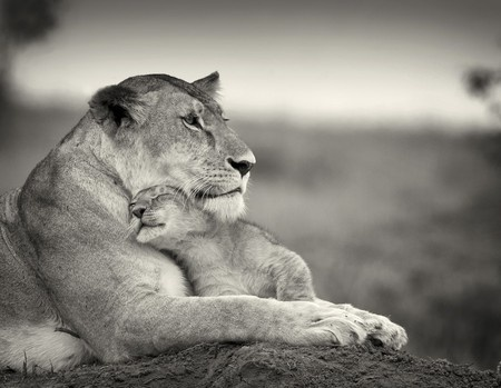 true loveBig Cat, Little One, Mothers Day, Nature, Children, Cubs, Baby Lion, Families, Animal