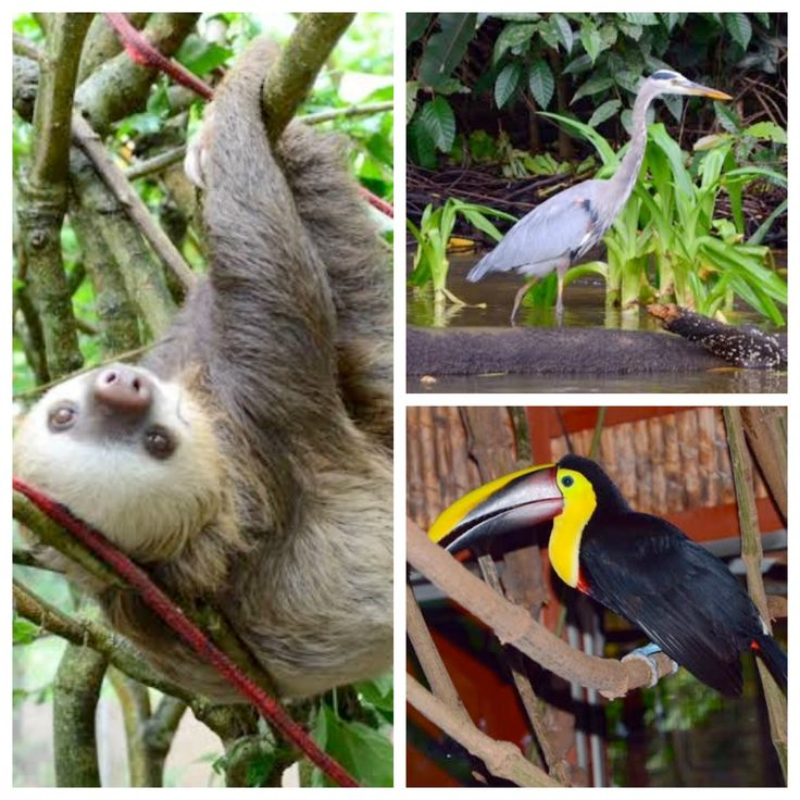 Beautiful wildlife in Puerto Limon, Costa Rica.