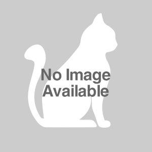 Testy | The Cat Network Inc | Miami, Florida | Pets.Overstock.com
