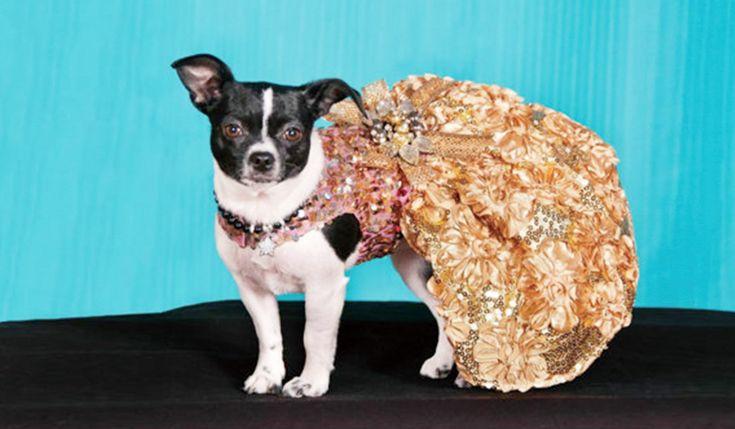 パーティシーズンの準備はお済みですかEtsyで探す愛犬のためのコスチューム