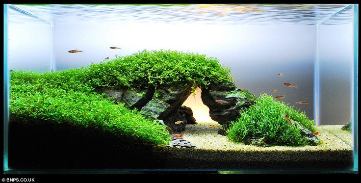 Zen And The Art Of Fish Tank Maintenance: U0027Aquascapersu0027 Herald The End For  Treasures Chests And Shipwrecks With Arty Installations. Planted  AquariumAquarium ...