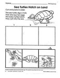 Preschool Sea Turtle Life Cycle Printable Unit Study