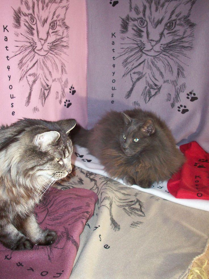 NYHET! Härlig go kattfilt i många läckra färger. Killarna från www.katt4you.se visar!
