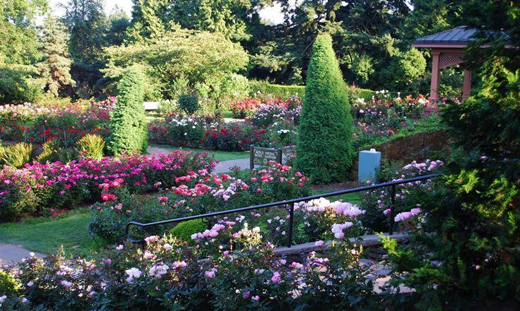 Portland Rose Gardens Washington Park More Beautiful