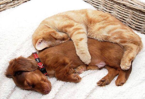 Teneri cuccioli Notizie: Coppie improbabili, le più strane e tenere amicizi...