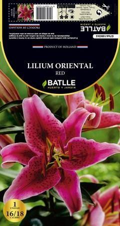 Bulbo Lilium Oriental Red