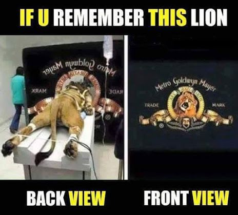 I have tried to find the original picture facts and can't find the source for this pic. The lion looks like he is at the vets and not in a position to roar. Anyone?