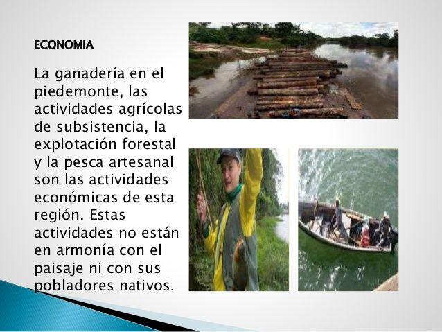 ECONOMIA La ganadería en el piedemonte, las actividades agrícolas de subsistencia, la explotación forestal y la pesca arte...