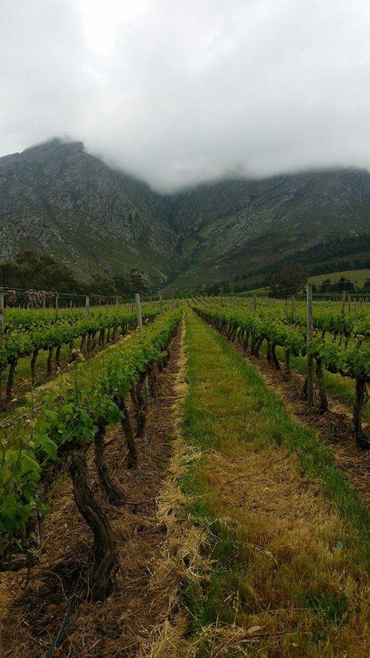 Beautiful #Winelands of the Grande Provence Heritage Estate