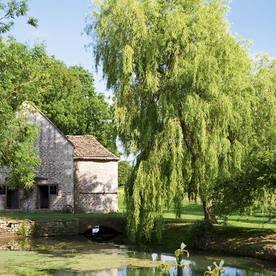 54 best images about country ponds on pinterest gardens for Weeping garden trees