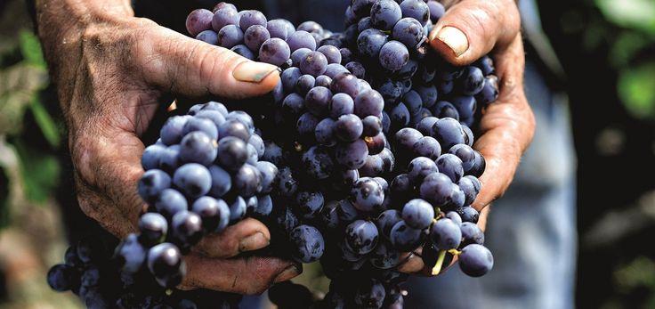 Riofavara. Il Nero d'Avola che non conosci. #Cibo, #Eat, #GeniusLoci, #NeroDAvola, #Riofavara, #SanBasilio, #Sicilia, #SpiritoDelLuogo, #ValDiNoto, #Vino, #Wine http://eat.cudriec.com/?p=4151