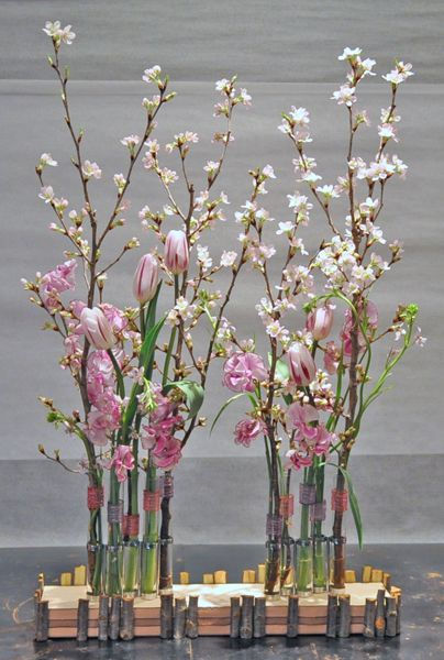 cherry blossoms, tulip, sweet pea, cyanella