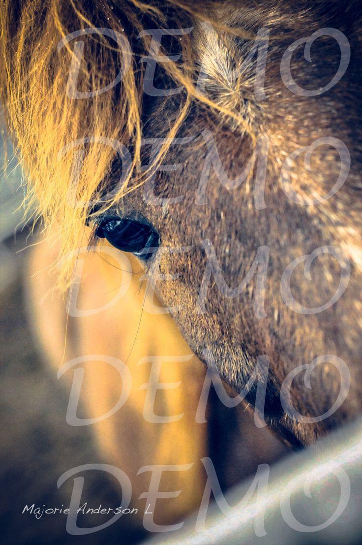 Photographie numérique couleur téléchargement immédiat, vintage, tête de cheval, équestre, western, brun, décoration murale, majorie de la boutique MajoriePhotography sur Etsy