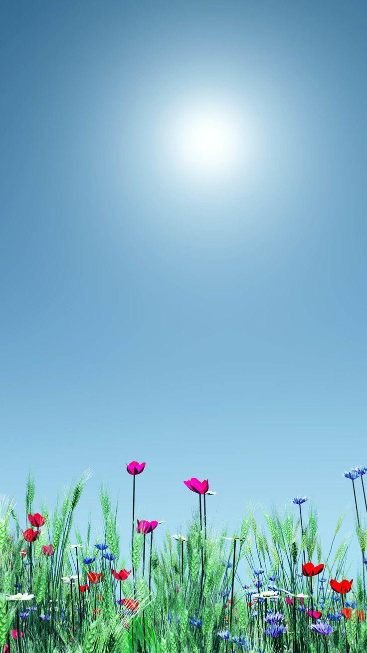 Wallpaper iphone bright - Little Wild Flower Sunshine Bright Scenery Iphone 6 Plus Wallpaper
