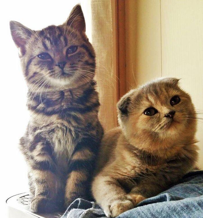 cheshire cat pic