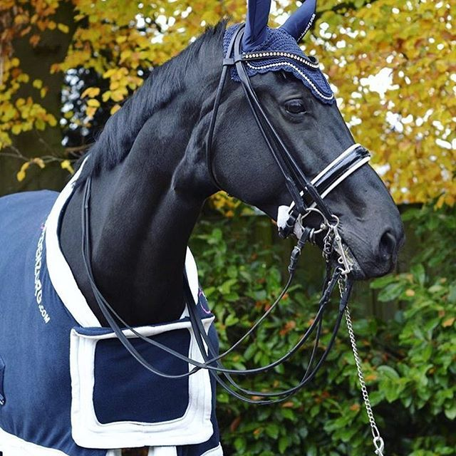 - INSPIRED BY : @bruninkdressage -  Les petons porte-drapeau 🇳🇱😏 Share your equestrian style with hashtag #pinkteampb - The Equestrian Pink of View.