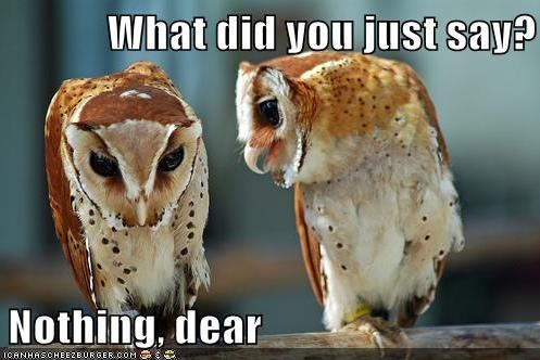 Oh, nothing dear..Animal Pictures, Laugh, Quotes, Funny Stuff, Humor, Things, Funny Animal, Owls, Animal Funny