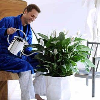 Deze slaapkamerplanten houden je gezond
