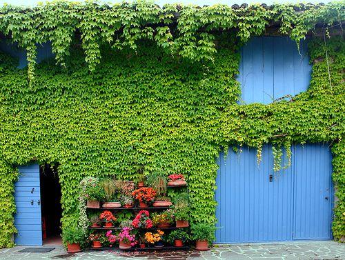 Lombardi, ItalyBlue Ivy, Blue Doors, Colors, Blue Green, Front Doors, Gardens, Italian Doors, Kilkenny Ireland, Ivy Blue