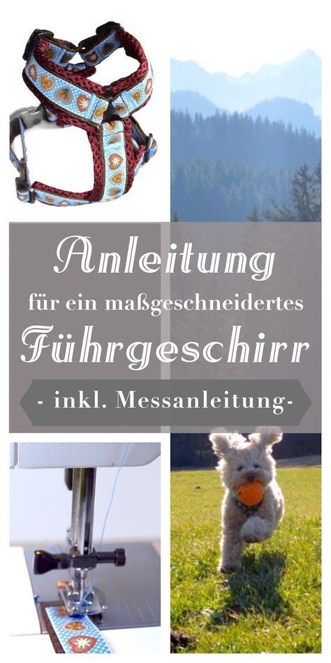 10 besten Luna Bilder auf Pinterest   Haustiere, Hund zubehör und ...