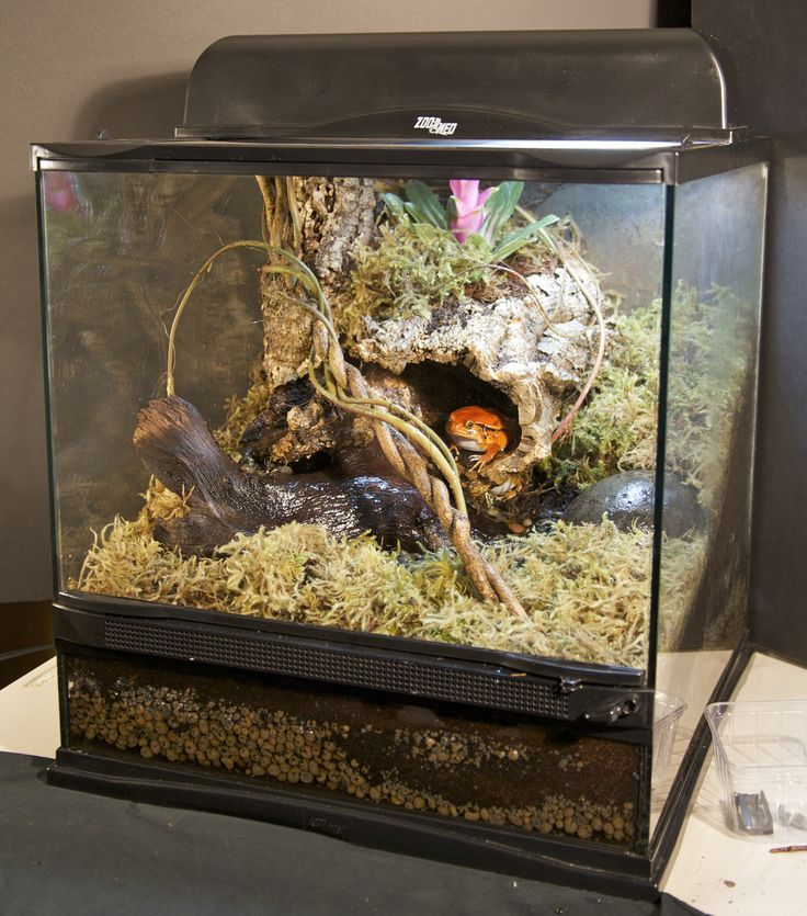 1000 Images About Zoo Med Habitats On Pinterest Crested