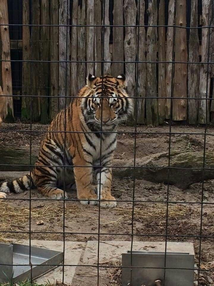 Pin by Suzanne Karikomi on Animals in Prison Animals