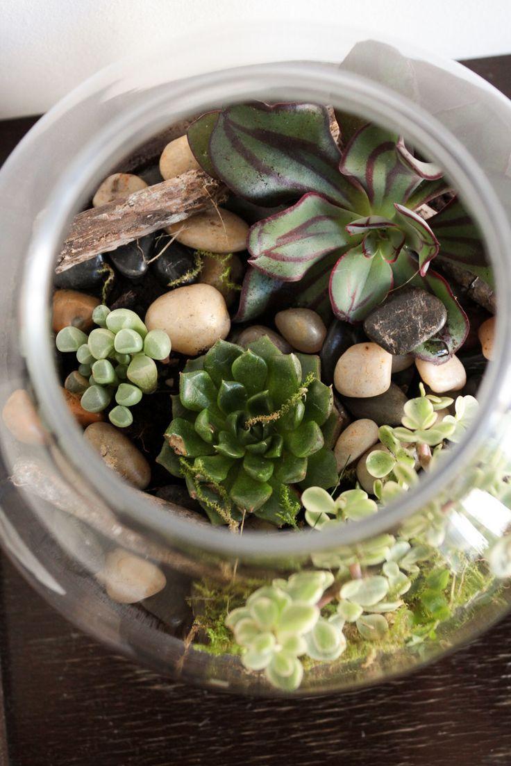 Die besten 25 wohnzimmer pflanzen ideen auf pinterest for Zimmerpflanzen ideen