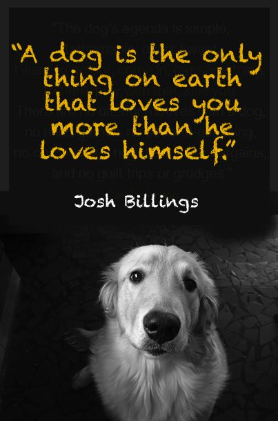 """""""I firmly believe that a loyal dog is the only being on this planet that will be there for you 100% of the time."""""""